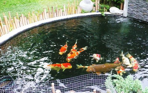 เลือกปลาที่จะเลี้ยง