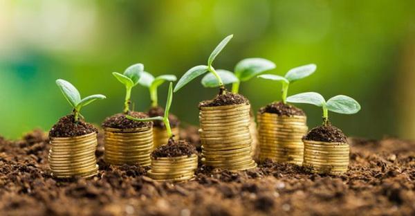 ต้นออมเงินต้นออมทอง